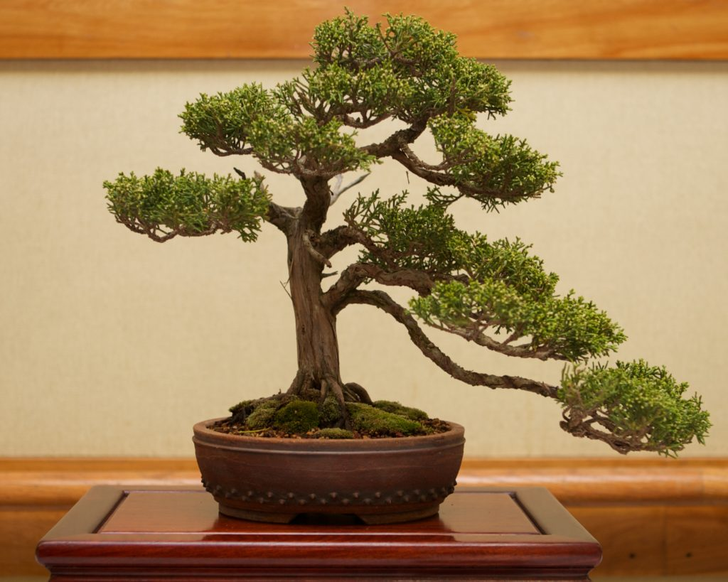 Photo of Bonsai